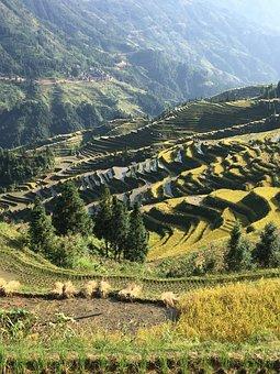 China, Rice, Guizhou, Rural