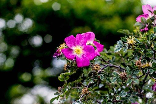 Flower, Garden, Nature, Spring, Green, Floral