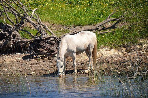 Horse, River, Water, Animal, Nature, White, Mold