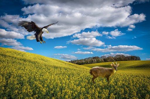 Wiltshire, Rape Seed, Composite, Environmental, Sky