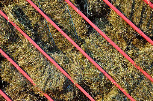 Hay, Haying, Agriculture, Rural, Farm, Straw, Nature