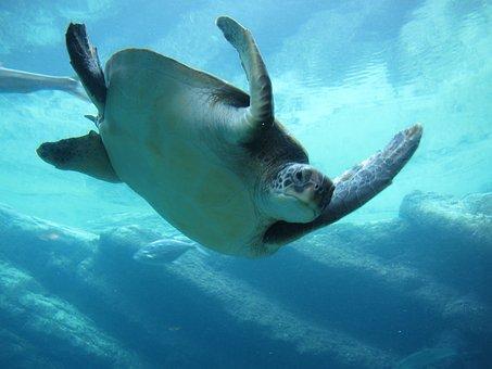 Sea, Aquarium, Water, Animals, Ocean, Underwater, Swim