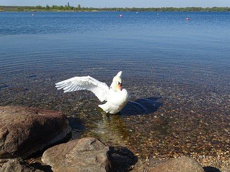 Lake, Badesee, Water, Waters, Landscape, Nature, Bank