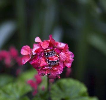 Ring, Flower, Heart, Bride Groom, Double, Son In Law