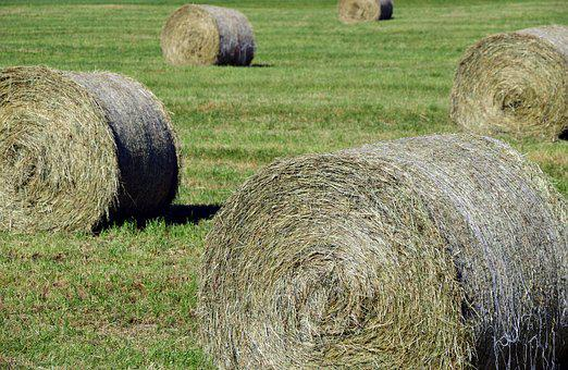 Hay, Hay Bales, Agriculture, Field, Harvest, Meadow