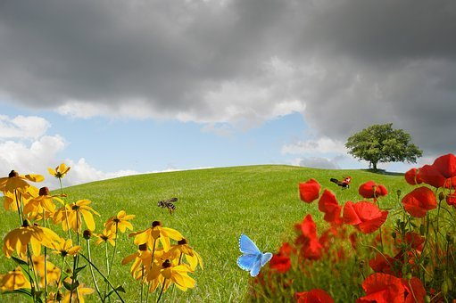 Meadow, Green Meadow, Flower Meadow, Grass, Nature