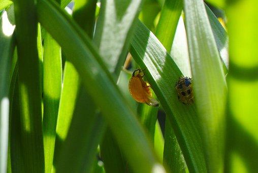 Hatched, Ladybug, Bug, Wildlife, Animal, Summer