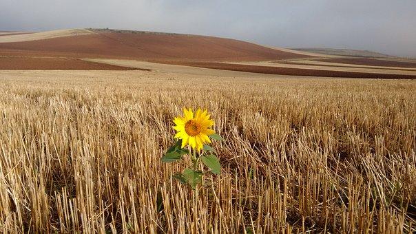 Path, Santiago, Sunflower, Magic, Loneliness, Survival