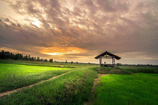 Home Outside, Thailand, Cornfield, Rice, People
