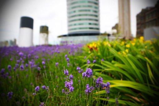 Rotterdam, Port Of Rotterdam, Flowers, Close Up