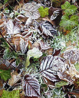Frost, Leaves, Autumn, Fall, Cold, Nature, Season