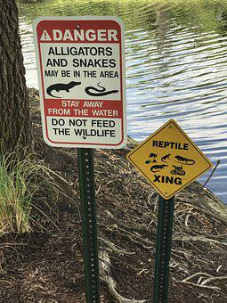 Alligator, Snakes, Wild, Natural, Wildlife, Reptile