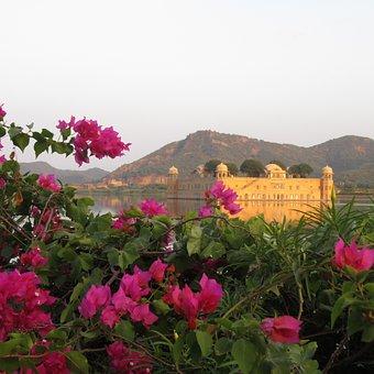 Jaipur, Jal Mahal, Tourism, Water, Bougainvillea
