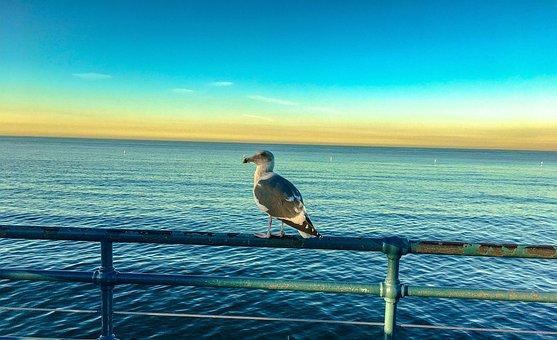 Bird, Landscape, Ocean, Nature, Water, Wild Birds