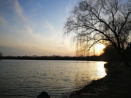 Lake, Sunset, Willow