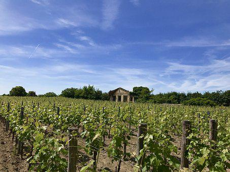 Saint-émilion, Winery, Vineyard, France, Wine