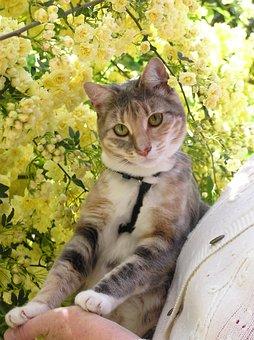 Cat, Animal, Cute, Pet, Roses, Garden, Feline