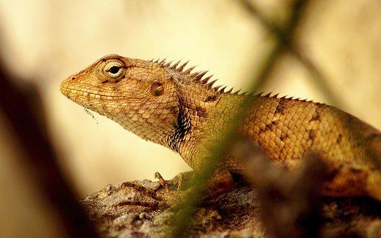 Chameleon, Yellow, Sun, Animal, Nature, Lizard, Reptile