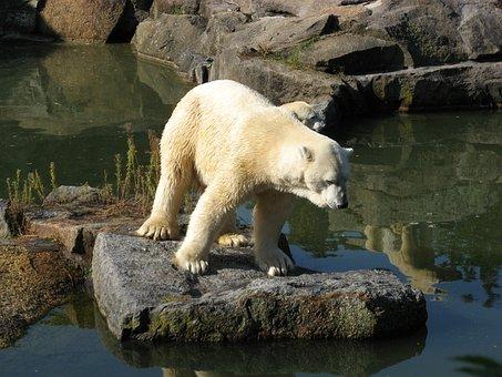 Zoo, Animals, Bear, Animal World, Polar Bear, Nature