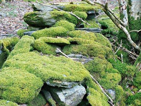 Moss, Drystone Wall, Woodland, Wall, Drystone, Old
