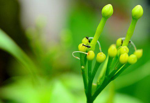 Green, Bluriness, Ant, Natutre, Nature, Color, Flower