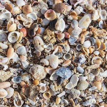 Mussels, Beach, Shells, Sea, Mussel Shells, Decoration