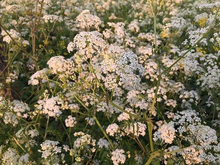 Flutes Herb, Green, Pasture, Landscape, Spring, Nature