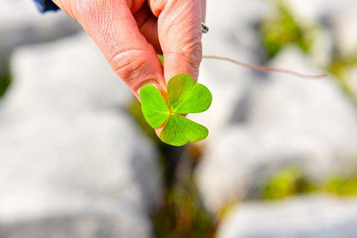 Shamrock, Ireland, Europe, Irish, Day, Leaf, Green