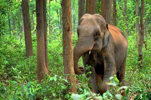 Elephant, Indian, Design, Animal, Ethnic, Symbol