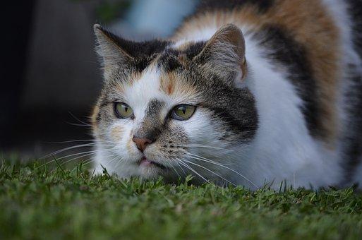 Hilde, Cat, Nature, Lurking, Summer, Animals, Pets