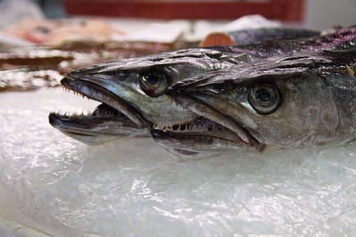 Fish, Echoppe, Carnivore