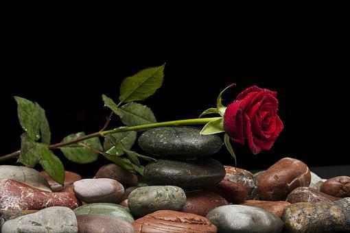 Rose, Love, Flower, Nature, Macro, Beautiful
