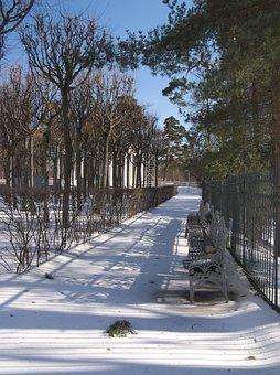 Winter, Snow, Tree, Nature, Outdoors, Footpath, Street
