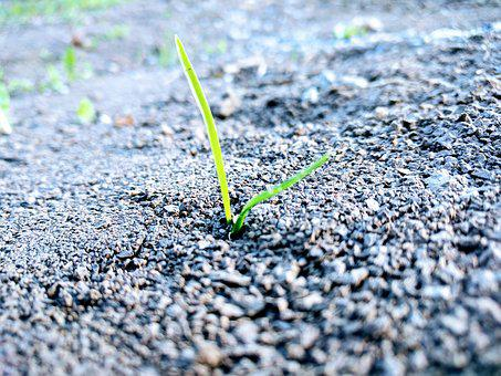 Grass, Earth, Sprout, Strength, New Beginning, Nature
