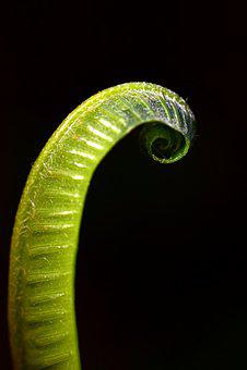Fern, Green, Plant, Nature, Leaves, Leaf Fern, Close Up