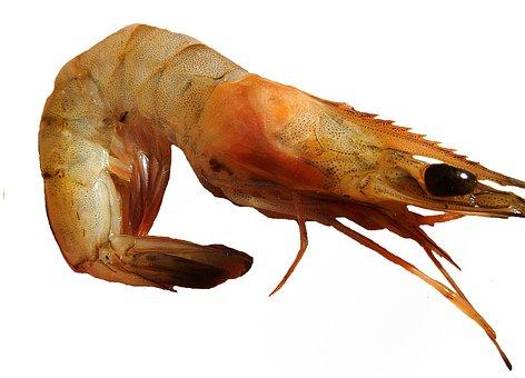 Shrimp, Paella, Prawns