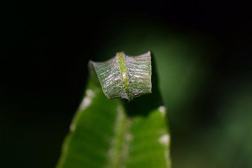 Fern, Green, Plant, Nature, Leaves, Leaf Fern, Close