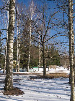 Snow, Winter, Tree, Nature, Forest, Cold - Temperature