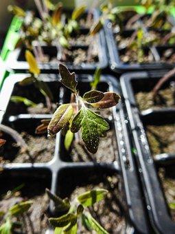 Seedlings, Plant, Green, Gardening, Soil, Agriculture