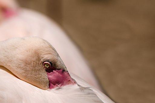 Flamingo, Bird, Water Bird, Pink Flamingo, Pink