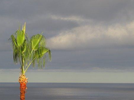 Nature, Beach, Las Palmas De Gran, Canaria