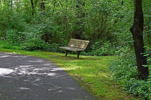 Bench On Green-way Path, Bench, Wooden, Path, Restful