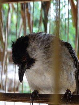 Bird, Cage, Finch