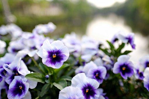 Flowers, Bokeh, Landscape, Plants, Light Mens Wool