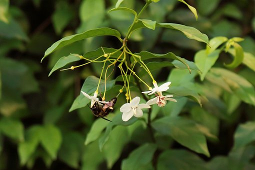 Nature, Bee, Leaf, Smell, Jasmine, Green