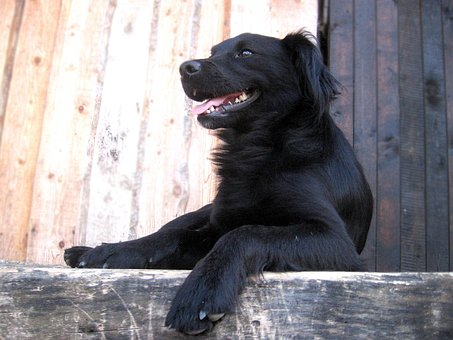 Dog, Lie, Language