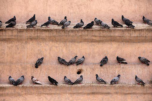 Pigeons, Wall, Gathered, Bird, Lines, Castle, Fortress