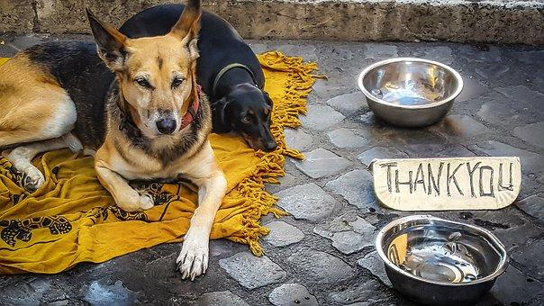 Dog, Beg, Beggar, Stray, Homeless, Thank You, Thanks