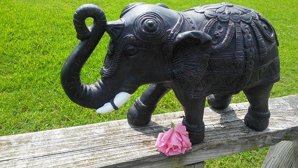 Symbolic, Elephant, Pink Rose, Withering, Elegant