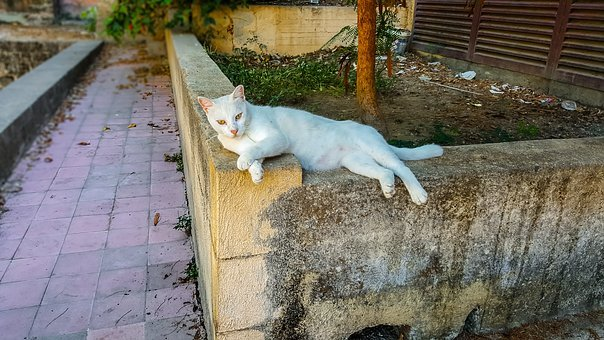Cat, Stray, Feral, Greece, Greek, Animal, Outdoor